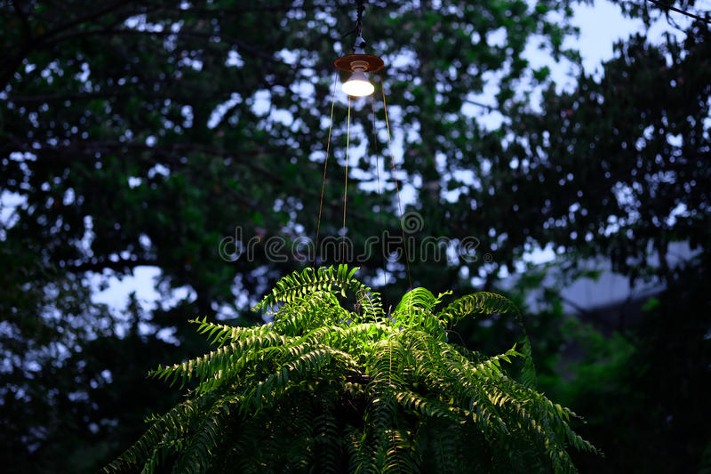 Luz e grama na noite imagens de stock