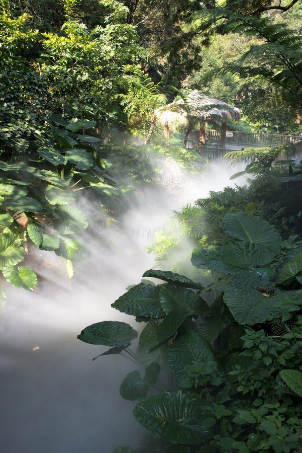 Luz e névoa na floresta imagem de stock