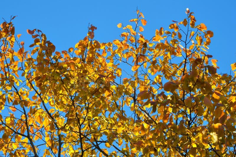 Luz e sombra bonitas nas folhas amarelas e verdes do vidoeiro Dia ensolarado do outono Luz e sombra Outono morno fotografia de stock royalty free