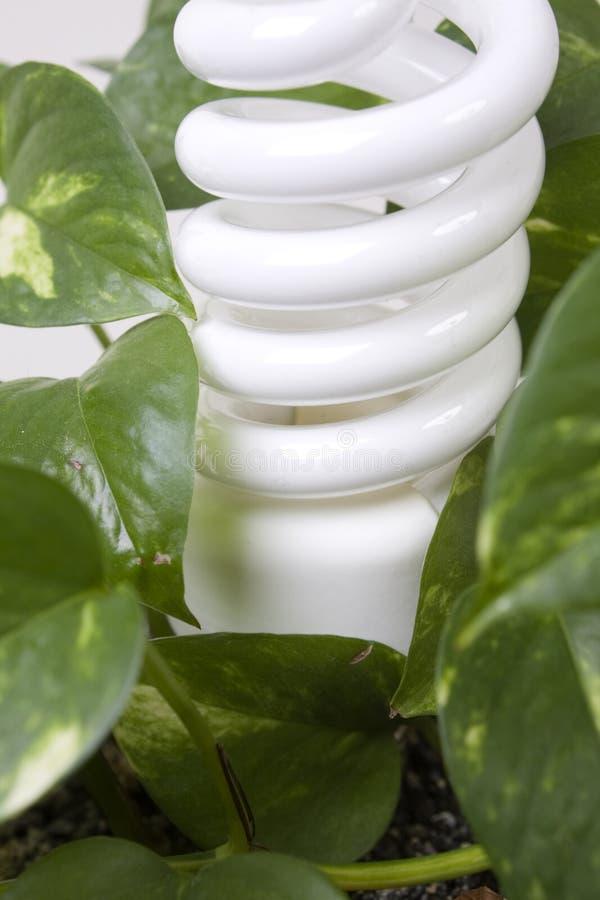 Luz eficiente da energia na planta fotos de stock