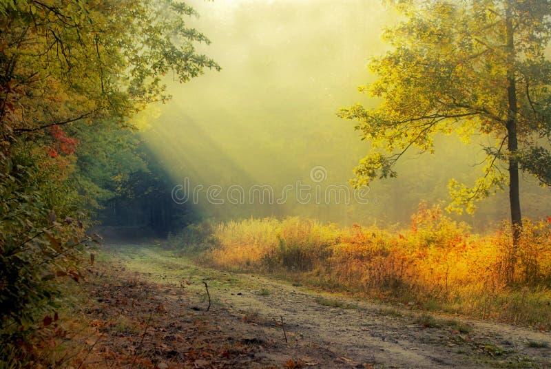Luz en bosque fotografía de archivo