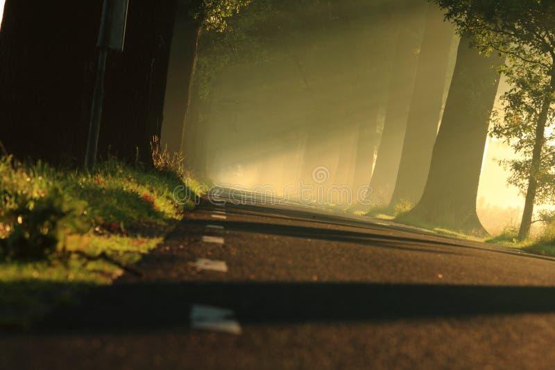 Luz en el camino imagen de archivo libre de regalías