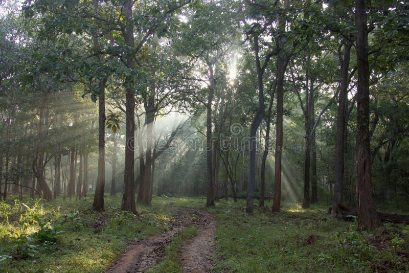 Luz en el extremo del camino foto de archivo