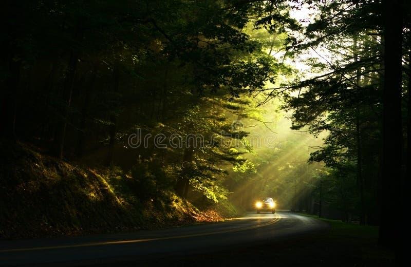 Luz en las maderas fotografía de archivo