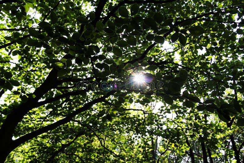 Luz en los árboles imagenes de archivo