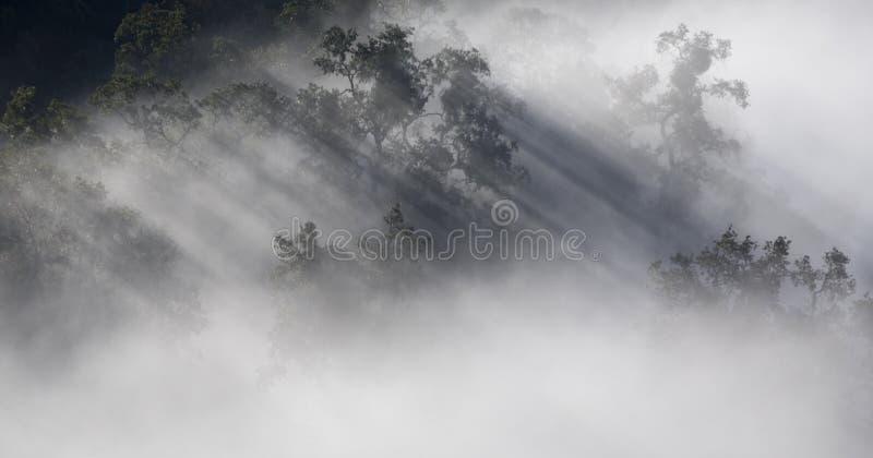Luz en niebla foto de archivo