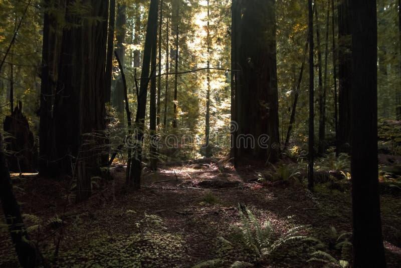 Luz en un bosque fotos de archivo libres de regalías