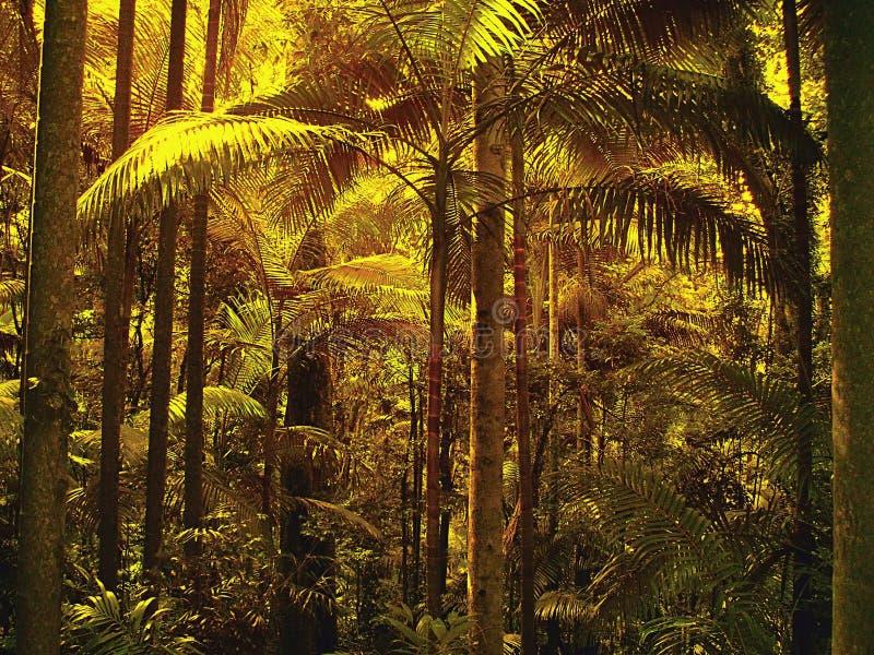 Luz filtrada a través de hojas de palma en selva tropical tropical sub imagen de archivo