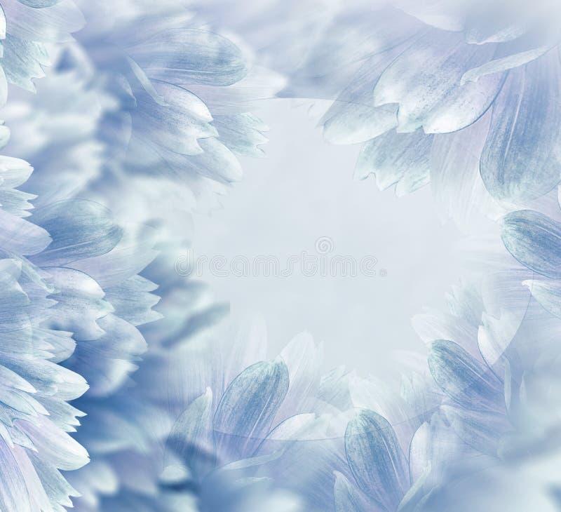 Luz floral - fundo bonito azul Flores e p?talas de uma d?lia branco-vermelha Close-up Composi??o da flor Cart?o para