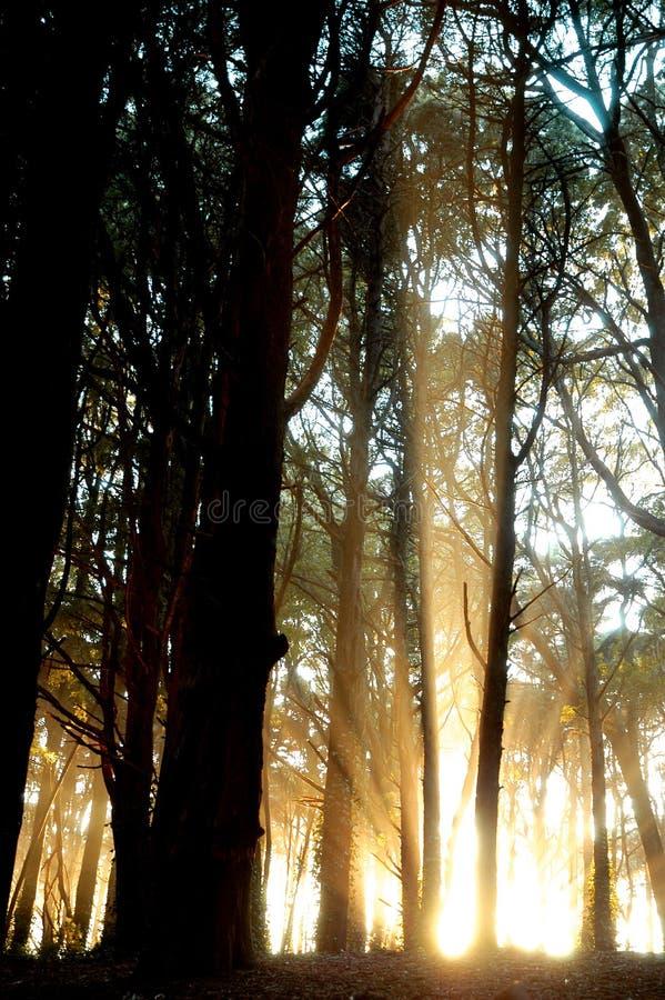 Luz forest5 fotografía de archivo libre de regalías