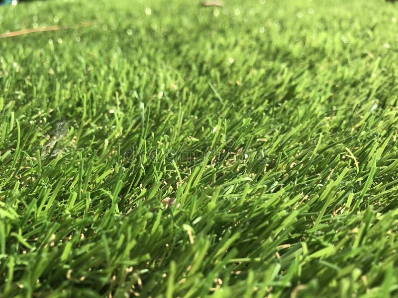 Luz - grama falsificada verde foto de stock