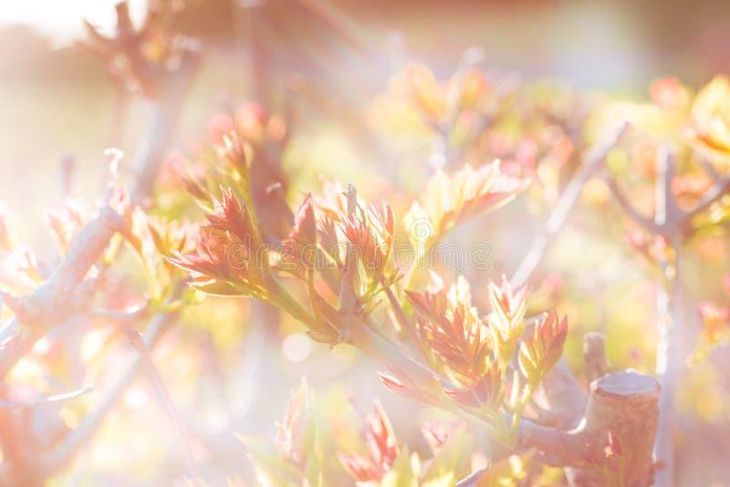 Luz hermosa de la ma?ana en el prado con un bokeh en un primero plano foto de archivo