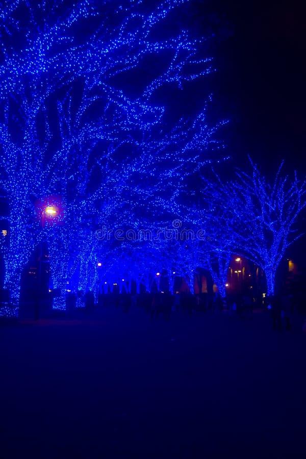 Luz iluminada en la calle en Omotesando Tokio imagen de archivo
