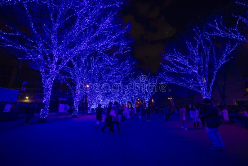 Luz iluminada en la calle en Omotesando Tokio fotografía de archivo libre de regalías