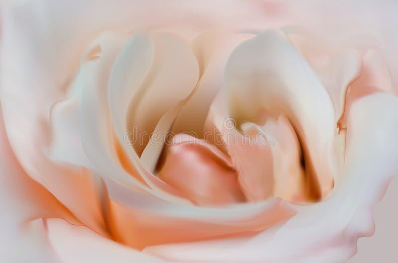 Luz - ilustração do centro da flor da rosa do rosa ilustração do vetor