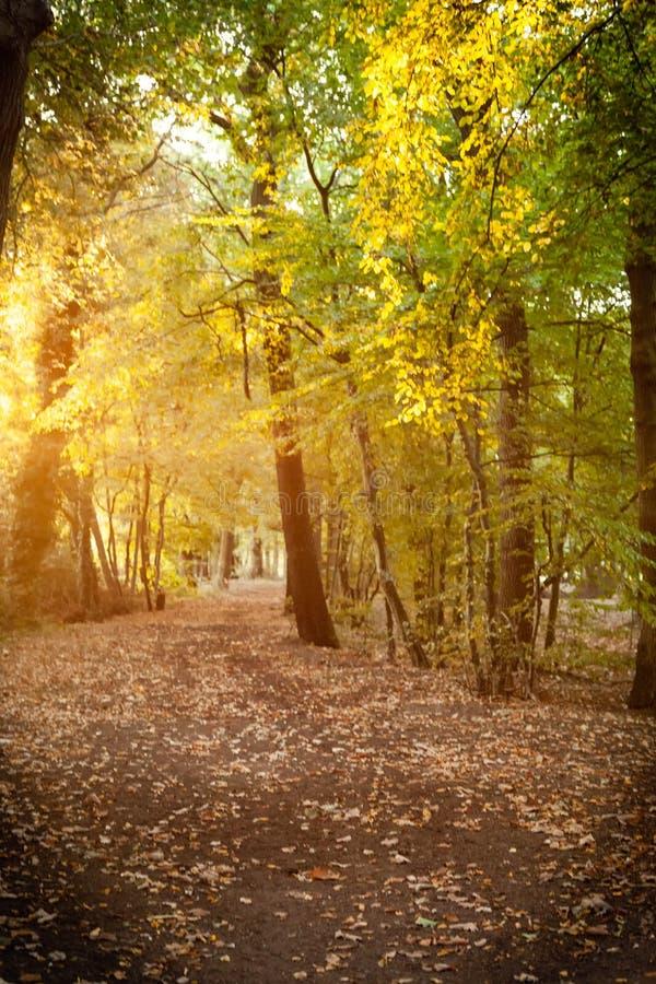 Luz mágica da manhã nas madeiras imagem de stock