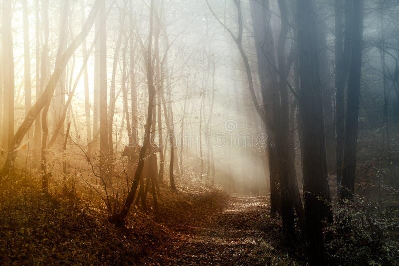 Luz na floresta foto de stock royalty free