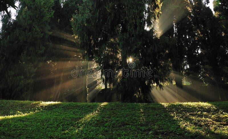 A luz na floresta foto de stock royalty free