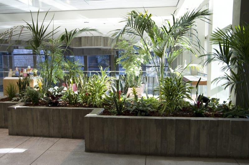 Luz natural dos interiores verdes do prédio de escritórios do eco imagem de stock