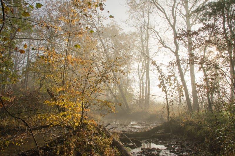 Luz nevoenta, filtrada contra o córrego da montanha fotos de stock