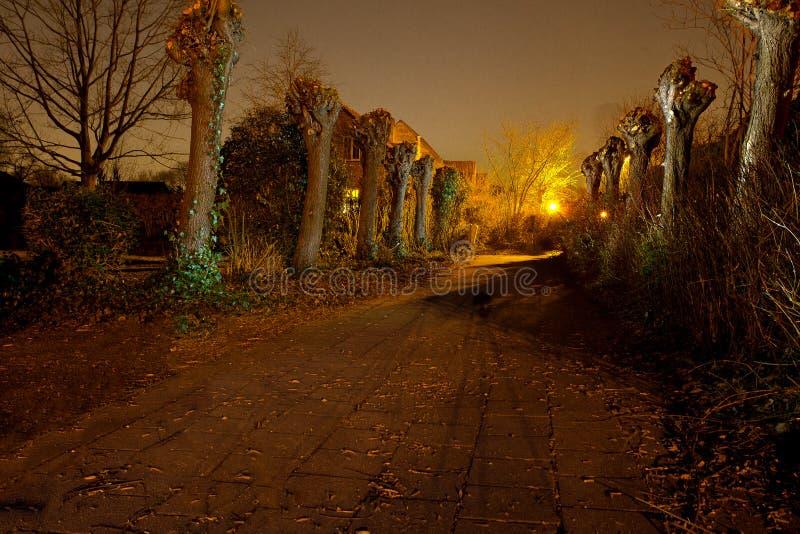 A luz pintada abandonou o salgueiro do descornado do trajeto, Antuérpia, Bélgica fotografia de stock