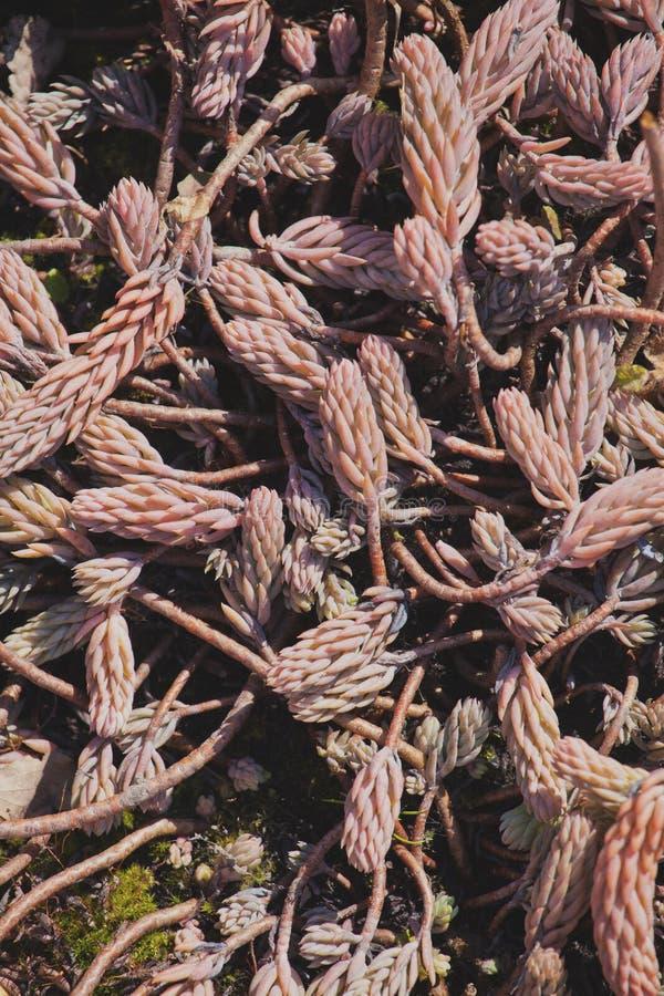 Luz roja del día del jardín de la primavera del cactus fotos de archivo libres de regalías