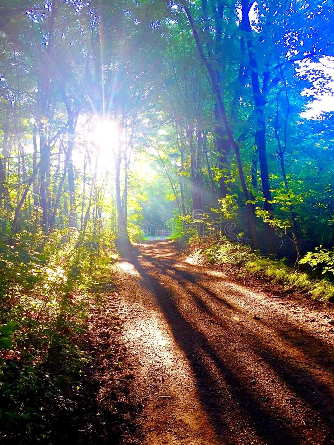 Luz solar através das árvores na estrada de terra imagens de stock