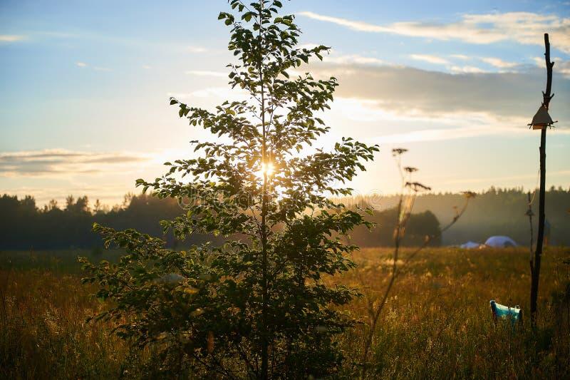 Luz solar através dos ramos da árvore no festival do verão foto de stock royalty free