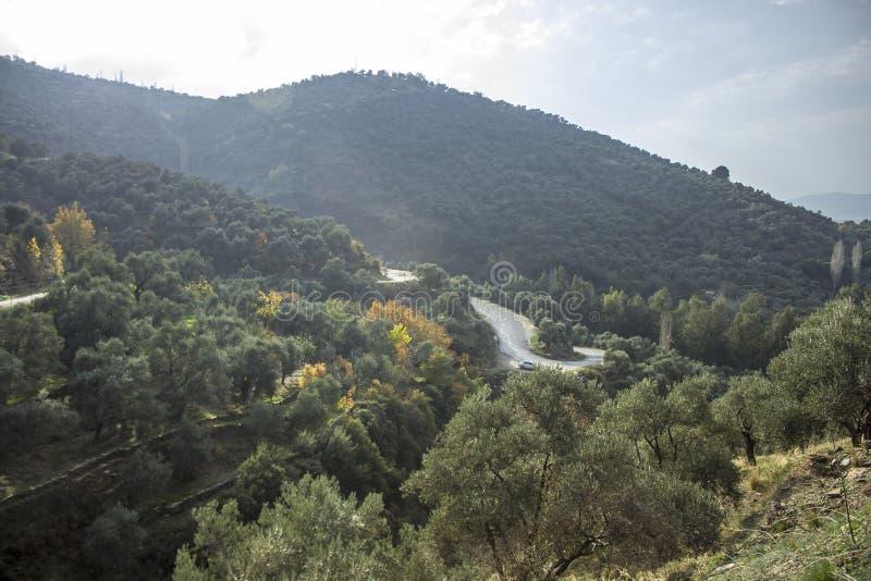 A luz solar bonita deixa cair em oliveiras no monte perto da estrada asfaltada no outono fotos de stock