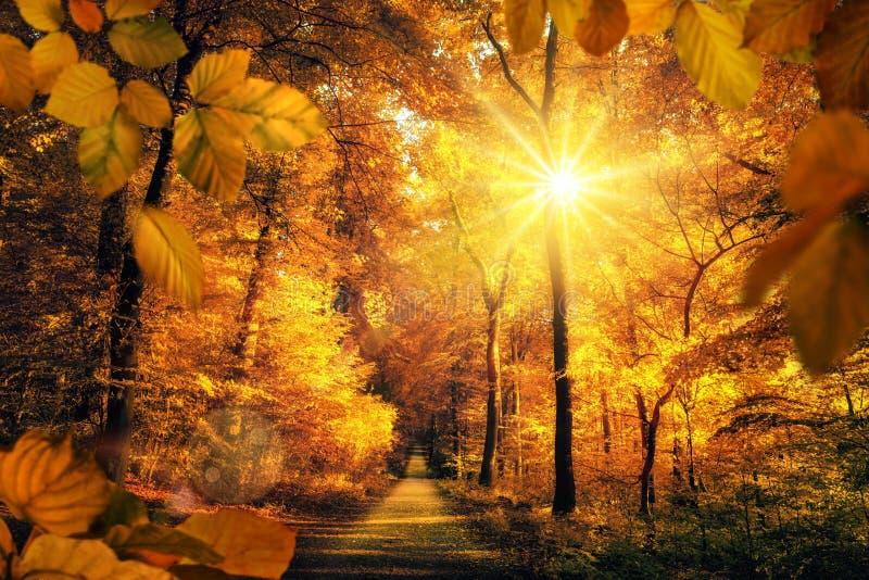 Luz solar bonita do outono em uma floresta imagem de stock royalty free