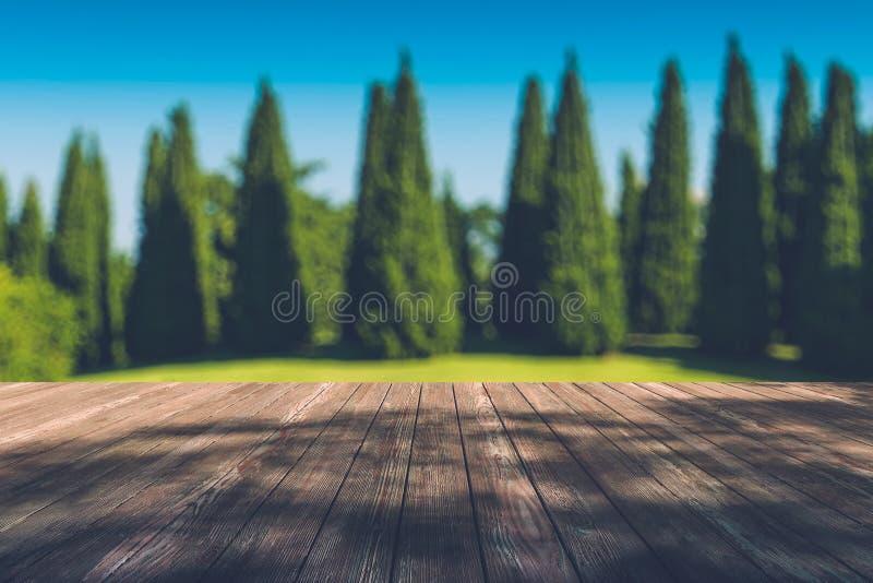 Luz solar bonita na floresta do outono com o assoalho de madeira das pranchas imagem de stock royalty free