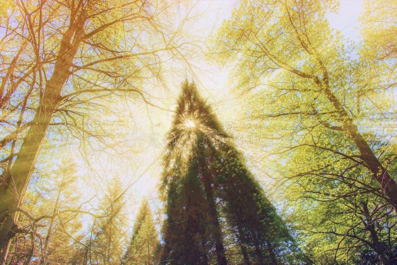 Luz solar colorida no jardim botânico de Dortmund Romberg foto de stock