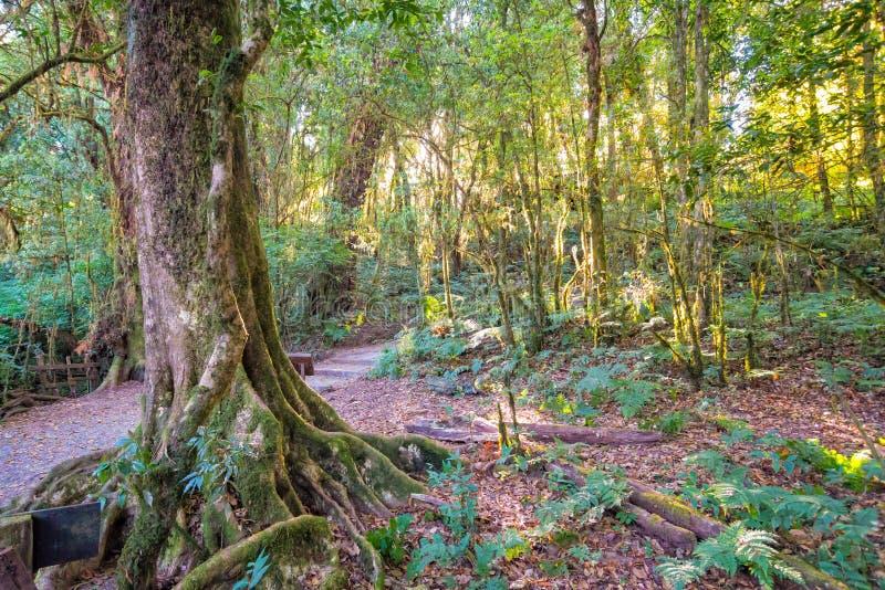 Luz solar com as árvores na floresta fotografia de stock royalty free