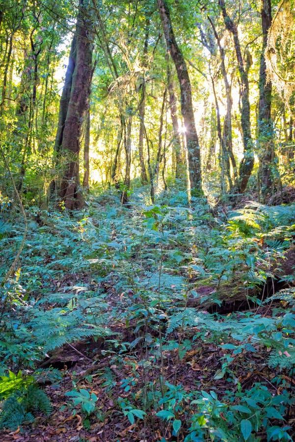 Luz solar com as árvores na floresta fotografia de stock