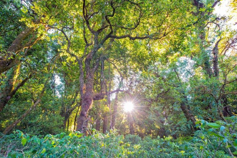 Luz solar com as árvores na floresta imagem de stock royalty free