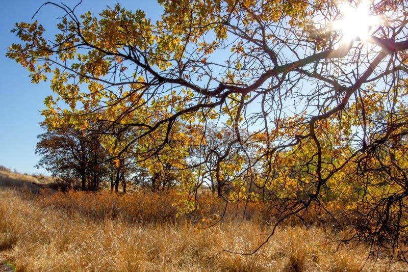 A luz solar criam cores intensas do ouro, amarelo e alaranjado entre as gramas e as árvores do rancho da montanha da neve fotografia de stock royalty free