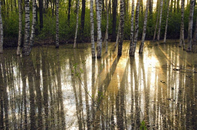 Luz solar da manhã na floresta da mola fotografia de stock royalty free