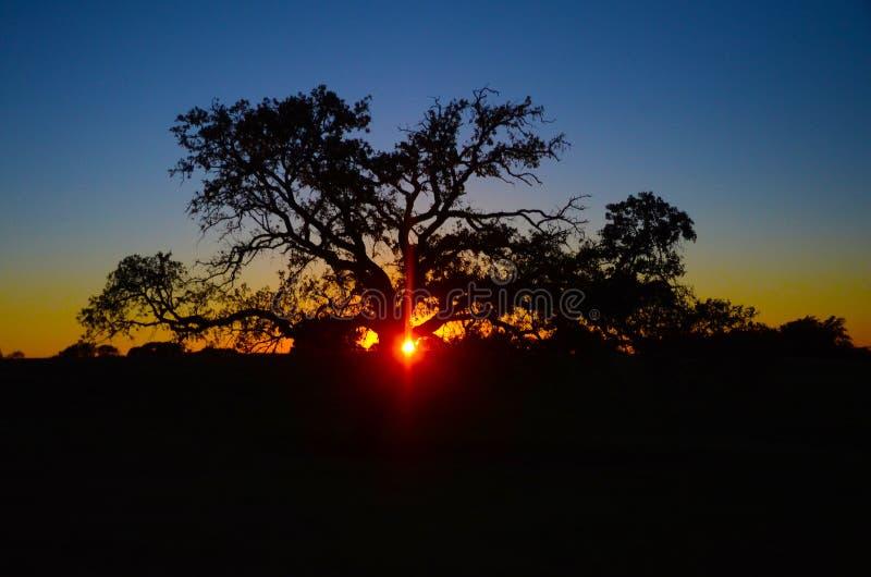 A luz solar do alvorecer jogou a árvore velha foto de stock