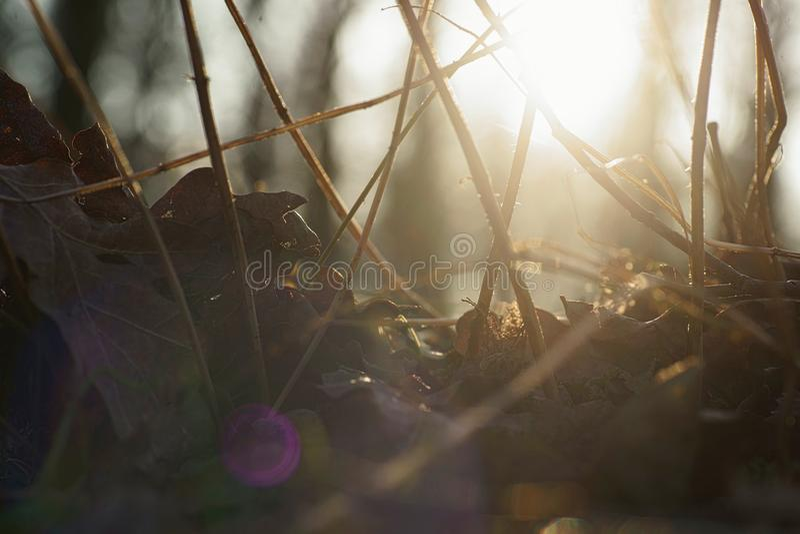 Luz solar do outono fotografia de stock royalty free