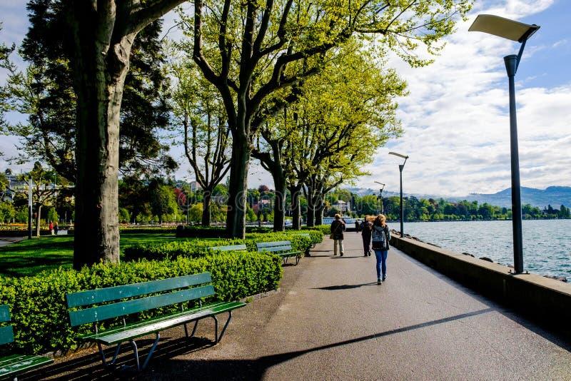 Luz solar dourada da manhã no parque da beira do lago fotografia de stock