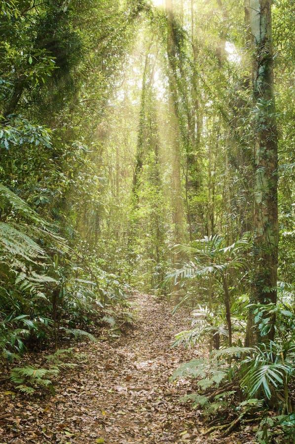 Luz solar na floresta húmida fotografia de stock royalty free