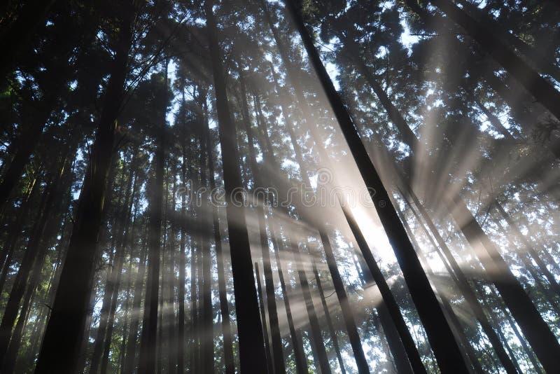 Luz solar nas madeiras fotografia de stock royalty free