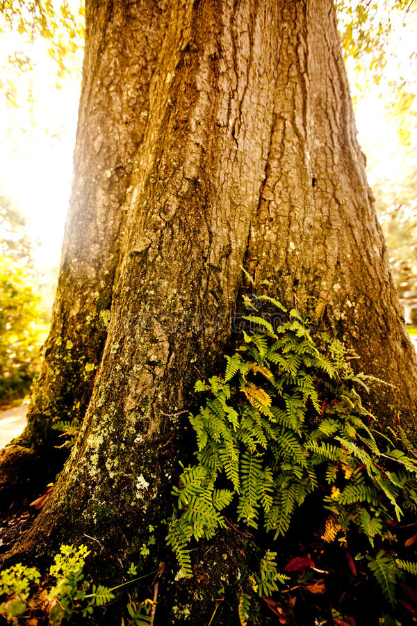 Luz solar que bate uma árvore foto de stock royalty free