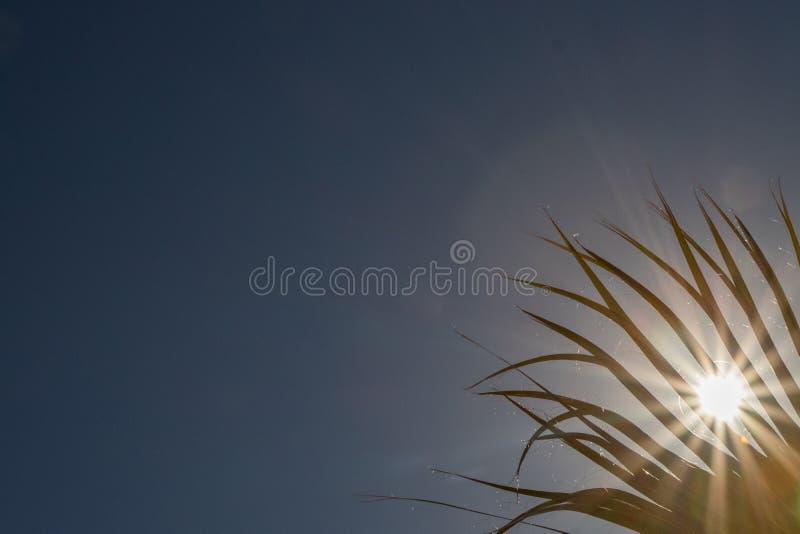 Luz solar que espreita através da palmeira fotografia de stock