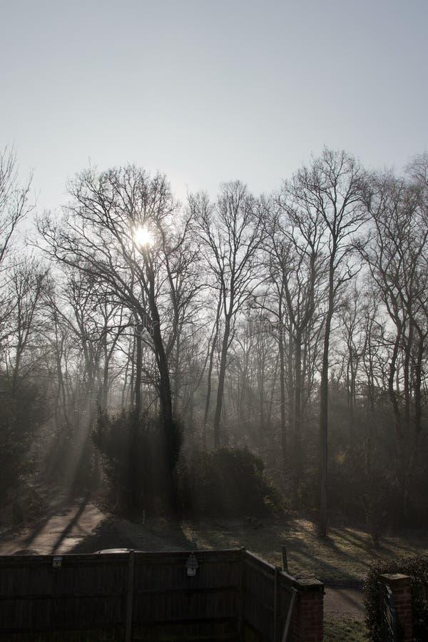 Luz solar que filtra através das árvores e da névoa desencapadas do inverno: feixes de luz na floresta com a cerca do jardim no p fotos de stock