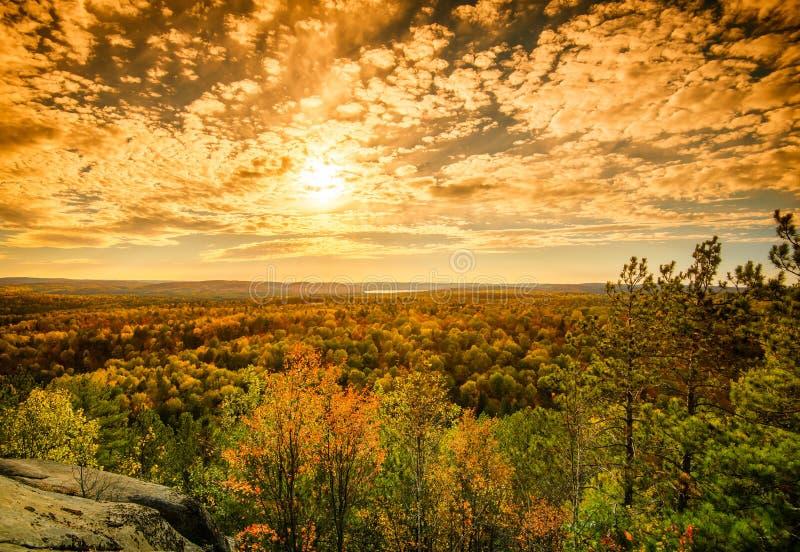 Luz solar sobre as copas de árvore em Autumn Forest - dourado imagem de stock royalty free