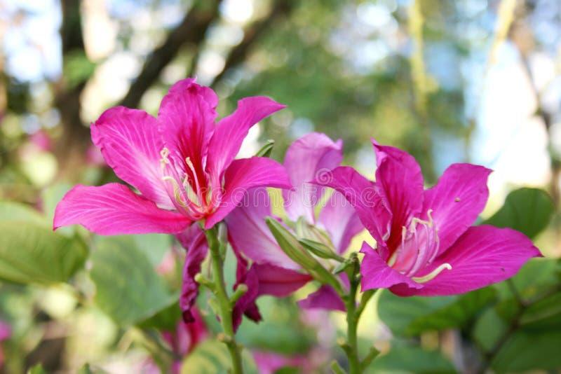 Luz suave de florescência das flores cor-de-rosa no jardim fotos de stock royalty free
