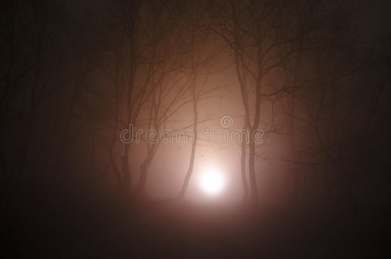 A luz surreal na floresta escura, fantasia mágica ilumina-se na floresta nevoenta feericamente imagem de stock royalty free