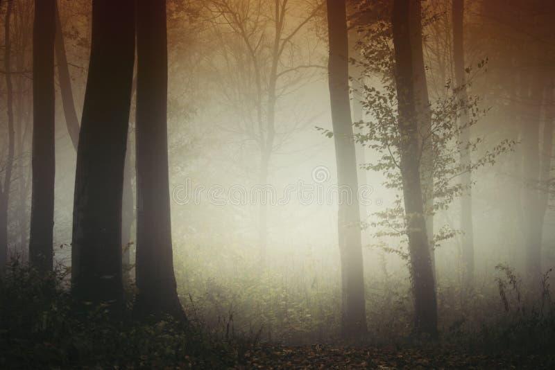 Luz surreal na floresta misteriosa de Transylvanian fotos de stock