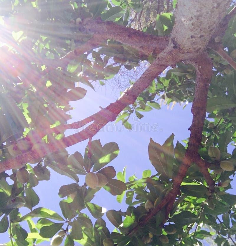 Luz a través de árboles imagenes de archivo